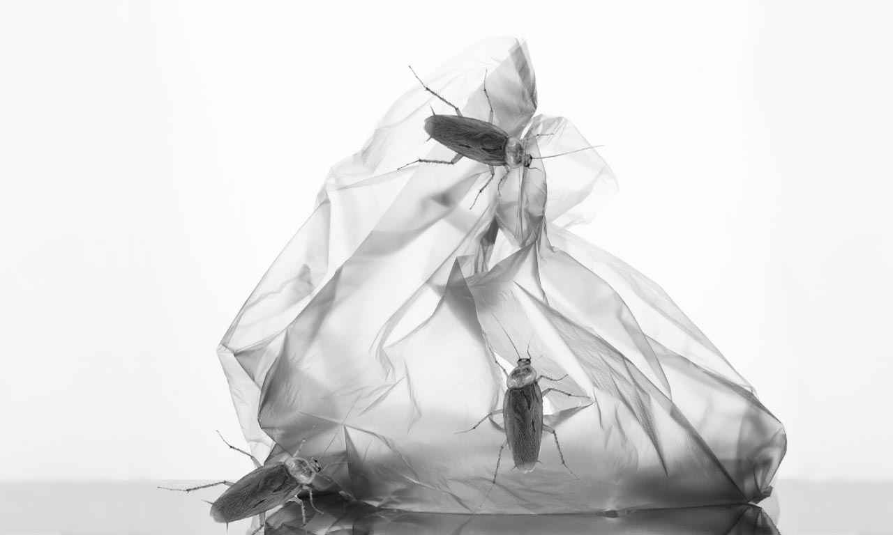 Can Cockroaches eat Plastic Bags