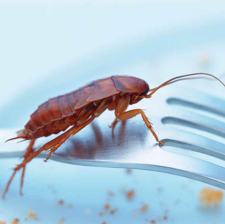 do roaches bite or sting