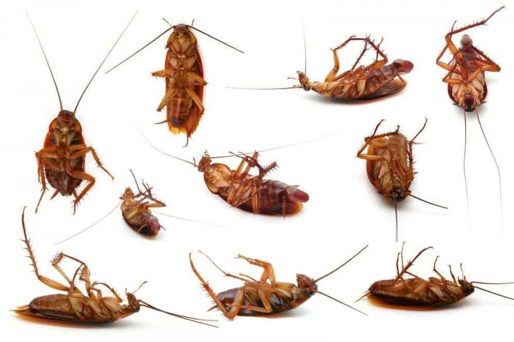 Best Roach Fogger Reviews