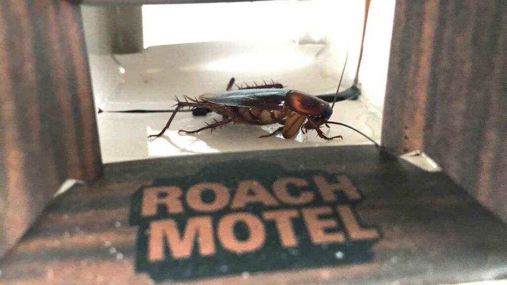 Black Flag Roach Motel Review