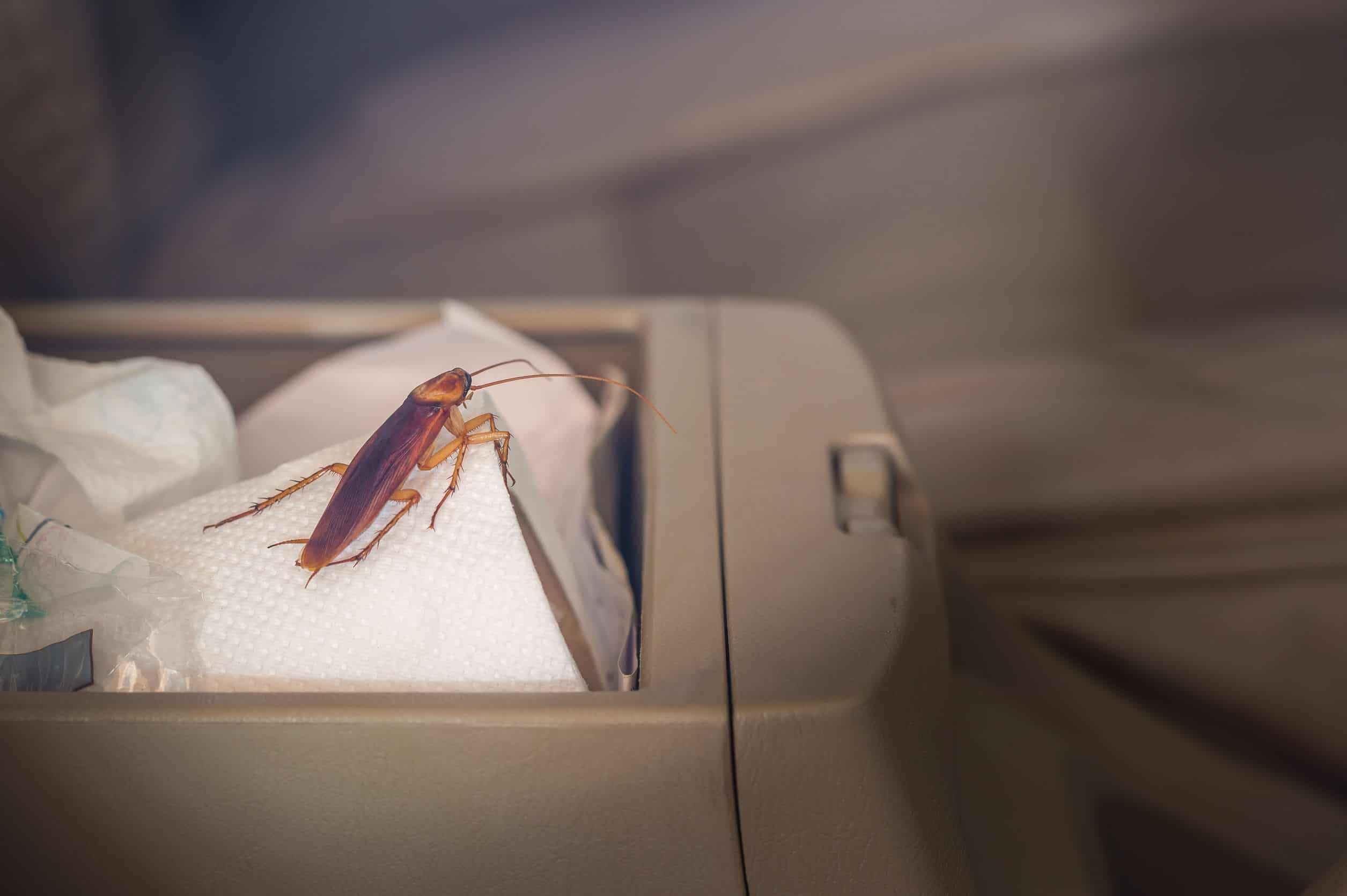 How to Get Rid of Roaches in Car Fast