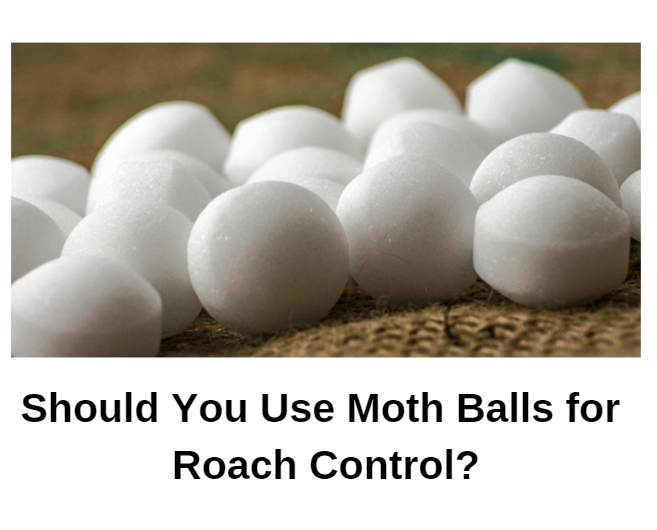 Does Mothballs Get Rid of Roaches