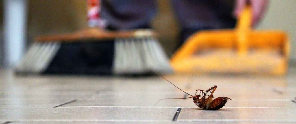 Essential Oils to Get Rid of Roaches
