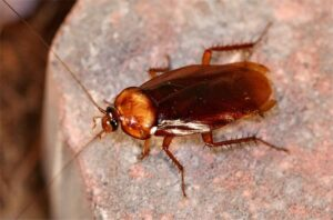 How Long Can Roaches Live Without Food