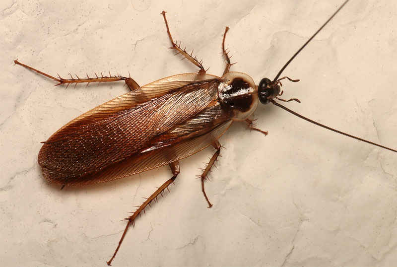 How to Get Rid of Wood Roaches