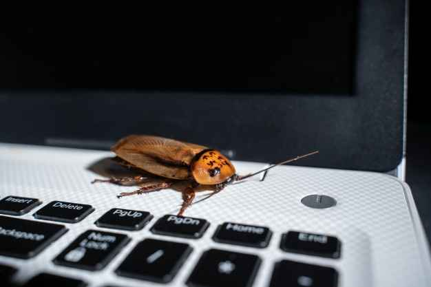 How to Get Roaches Out of My Laptop