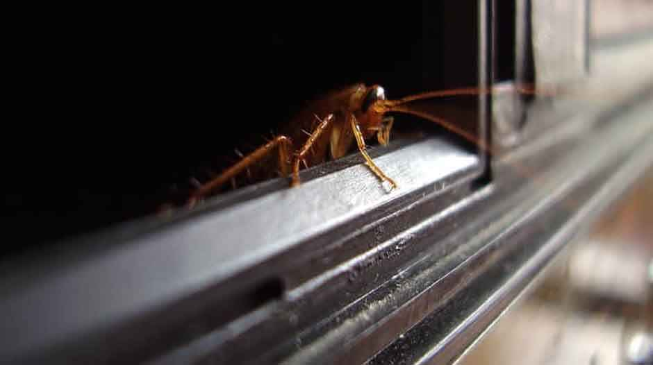How Can Cockroaches Survive in a Microwave