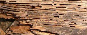 Do Termites Eat Pressure-treated Wood