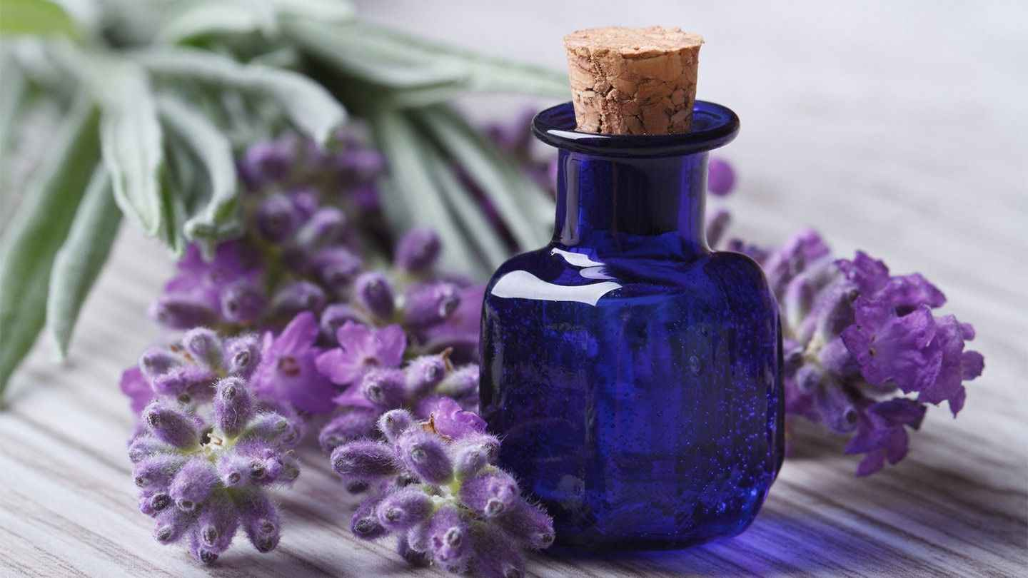 Does Lavender repel Roaches