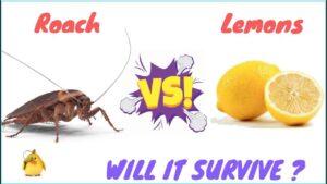 Does Lemon Juice Kill Roaches
