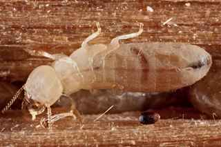 Is Termite Control Safe For Children