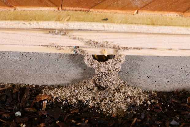 What Are The Signs That My Home Has Termites